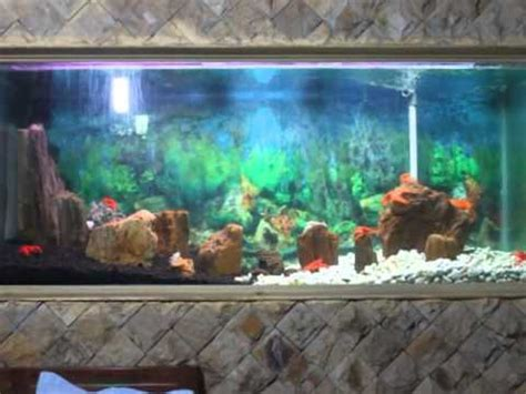 desain aquarium air tawar aquarium lobster air tawar youtube