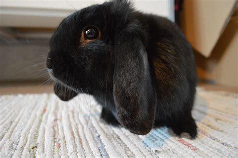 come si chiama la gabbia dei conigli un arredo a misura di gatti cani e conigli okap 236