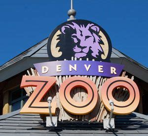 zoo lights colorado denver zoo and december s zoo lights denver colorado