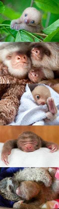 imagenes google tamaño rarezas de animales buscar con google animal shot