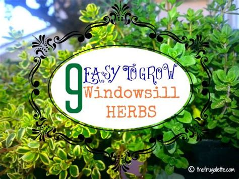 Windowsill Herbs 98 Best Images About Garden Inspiration On