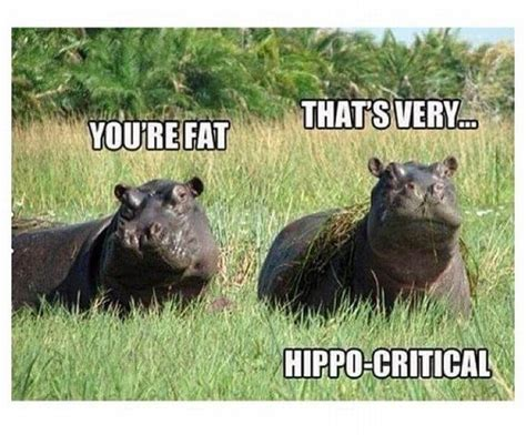 animal puns    funny theyre  terrible