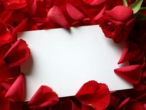 high quality wallpapers valentines day roses wallpapers