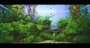 Oliver Knott Aquascaping Aquarium Aquarien Amp Diskus Pinterest