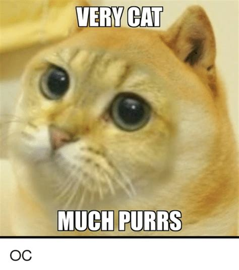 Dank Cat Memes - very cat much purrs oc cats meme on sizzle
