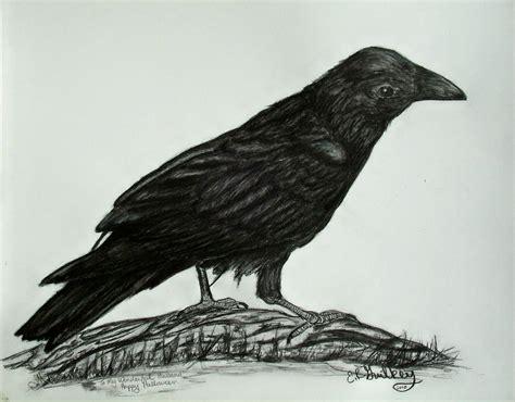 raven drawing by elizabeth guilkey