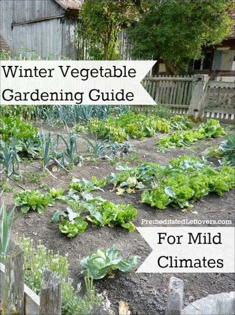 Vegetable Garden In Winter Winter Vegetable Gardening Guide For Mild Climates