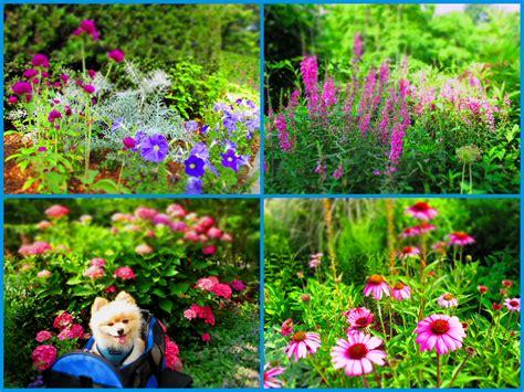 Flowers For Summer Garden - summer flower summer flowers for garden
