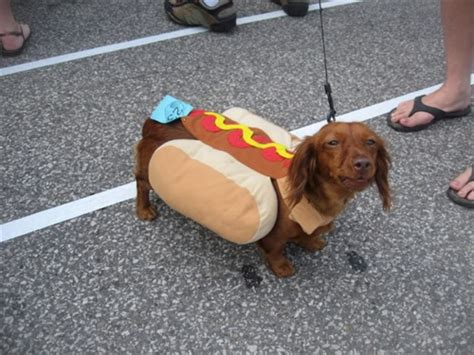 sausage dogs top 5 dachshund pup costumes that ll your mind a s