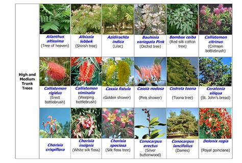 Top 28 Common Landscape Plants Common Flowering Common Landscaping Plants
