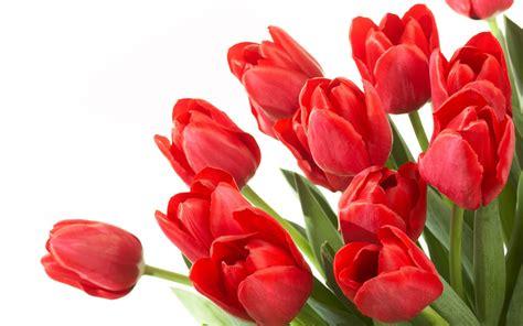 what color flowers for new year tulipas arranjos e buquet flores cultura mix