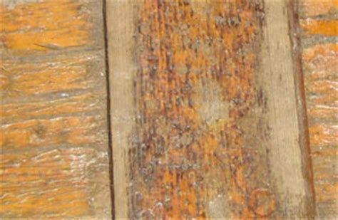 deck stain failure   Best Deck Stain Reviews Ratings