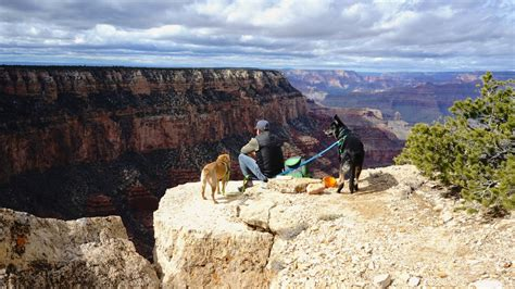 are dogs allowed in national parks the most friendly national parks in the u s