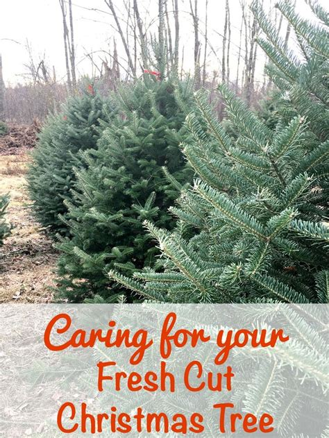 best prices on fresh cut trees 35 best i santa images on activities crafts and