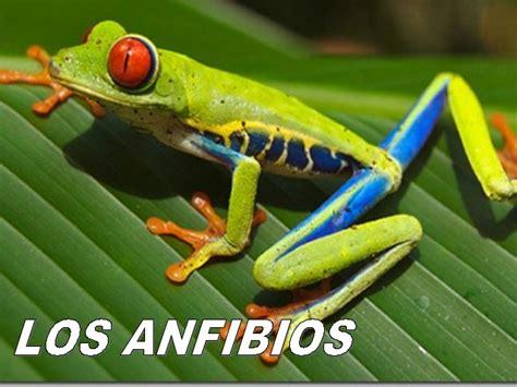 imagenes jpg que son los anfibios