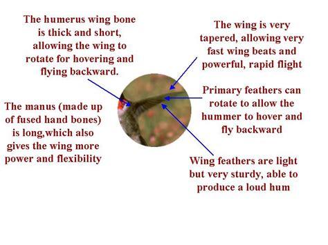 journey north hummingbirds