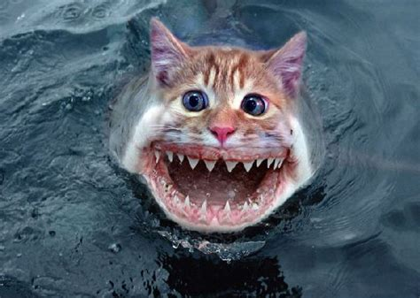 What animal eats sharks?