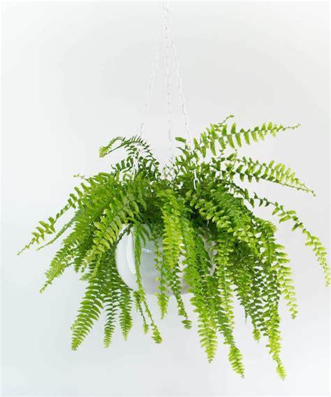 plante verte pour chambre quelle plante pour quelle pi 232 ce de votre int 233 rieur
