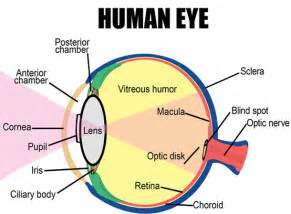 what is the colored part of the eye top 15 amazing facts about your