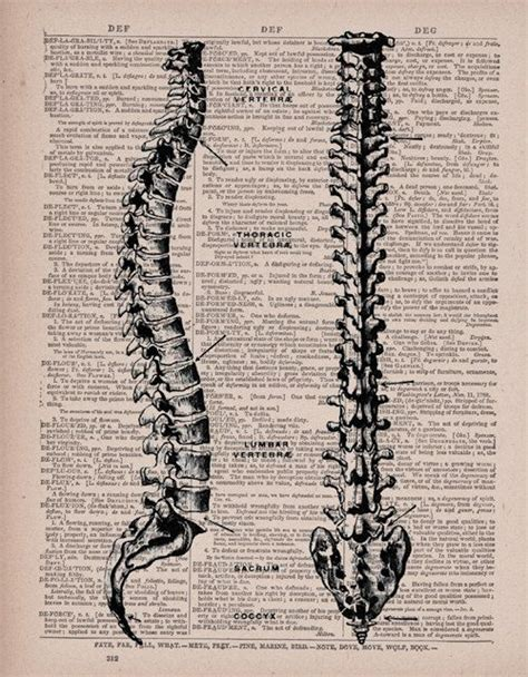 tattoo pen argos 170 best spinal cord images on pinterest spinal cord