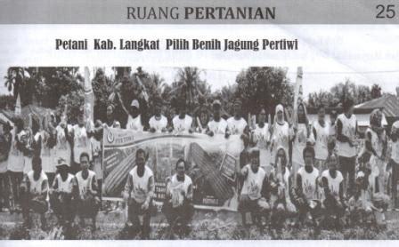 Benih Jagung Pertiwi petani langkat pilih benih jagung pertiwi benih pertiwi
