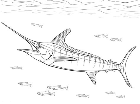 marlin fish coloring pages wealth coloring pages
