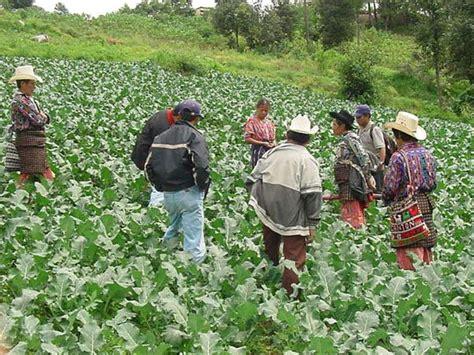 imagenes agricultura maya imagenes de una poblacion rural imagui