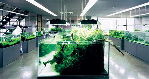 Aquascapes Com Nature Aquarium Gallery Ada Nature Aquarium