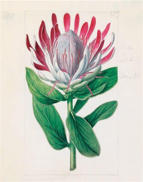 Fendi With Flower Size 28 X 23 Cm Rp 4750000 protea formosa crown flowered protea sydenham teast