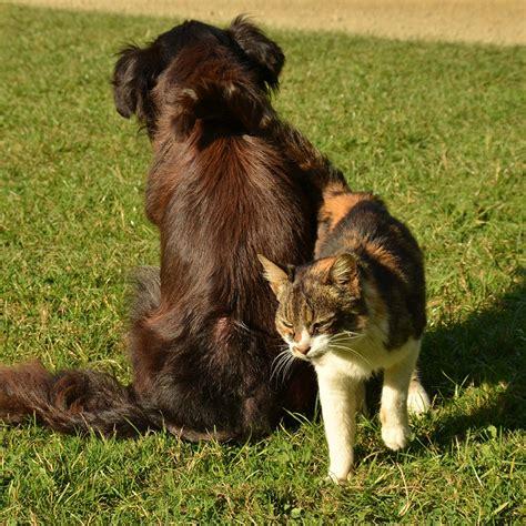 veterinario pavia quando e gatto diventano anziani ambulatorio