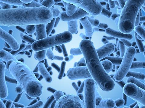 Probiotics Cause Stools by Probiotics For Crohn S Disease Discovertherapies