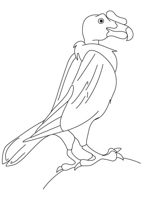 king vulture coloring page new world vulture coloring page download free new world