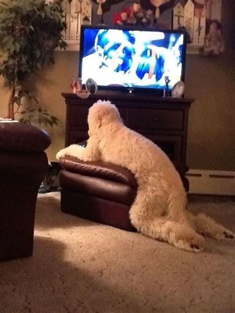 Most Hilarious Animals by 50 Most Animal Pics Of The Year Animal Pics