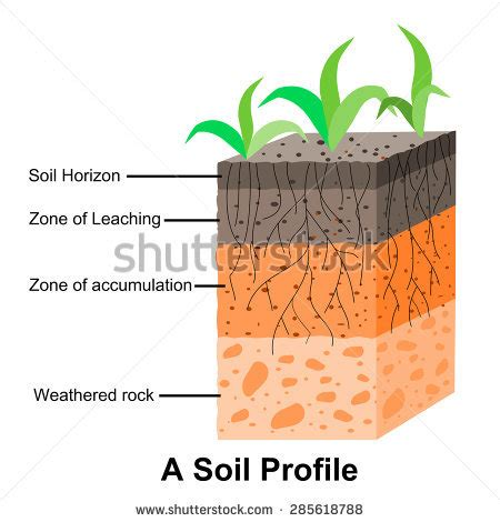diagram of a soil profile soil profile diagram for children www pixshark