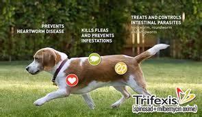 comfortis plus trifexis for dogs rebates