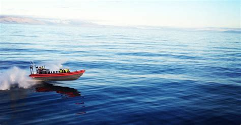 rib boat guide whale watching in h 250 sav 237 k private rib boat tour guide