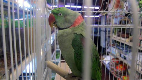 top 28 bird store toronto 1d pop up store in toronto