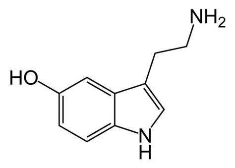 serotonina alimentazione serotonina