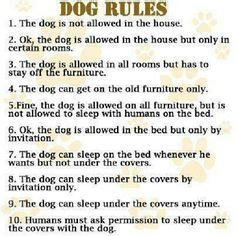 welcome to my house dog rules welcome to my house rules dog poster