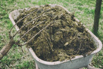 different types of animal manure pros and cons of using