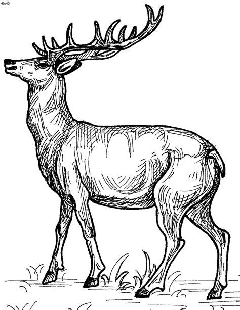 detailed deer coloring page deer coloring pages pinterest tumblr google yahoo imgur