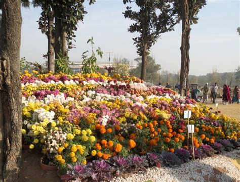 Autumn Flowers For The Garden Autumn Flowers Show Bloom In Islamabad