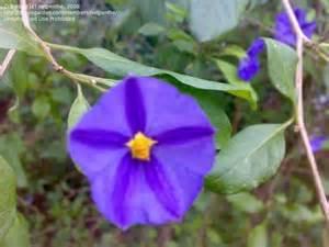 Garden Flower Identification Plant Identification Closed Purple Flowers 1 By Netpenthe