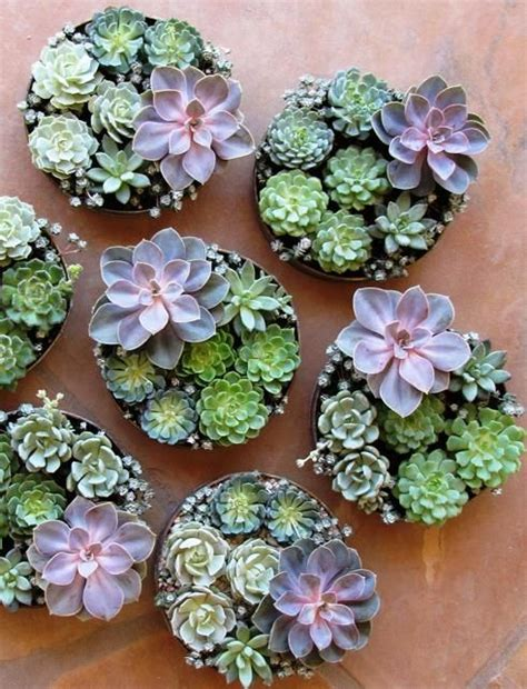 cute succulents how to display succulents 30 cute exles digsdigs