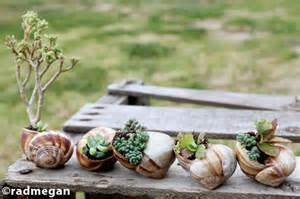 discover lifestyle diy miniature garden with seashells