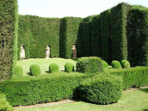 best evergreen hedge the best evergreen hedge shrubs for privacy progardentips