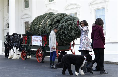 official christmas tree arrives at white house the korea