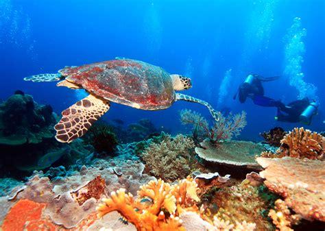 cozumel dive cozumel coral reefs cozumel mexico