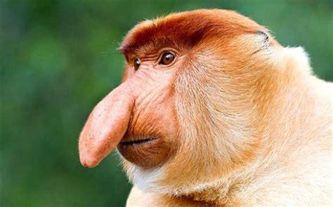 Wajah Akila ecco gli animali pi 249 strani mondo foto 1 di 6