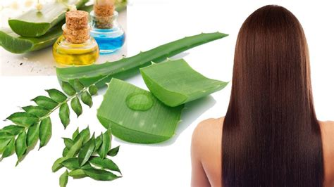 homemade thickening hair recipes homemade hair care tips for long and thick hair